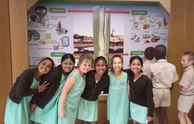 Grade 3 Sugar Terminal